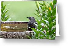 Gray Catbird Greeting Card