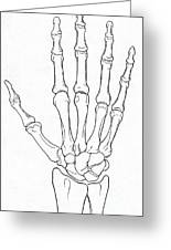Hand And Wrist Bones Greeting Card