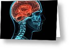 Head Anatomy, Artwork Greeting Card