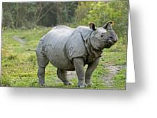 Indian Rhinoceros Greeting Card by Tony Camacho