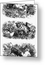 John H. Speke (1827-1864) Greeting Card