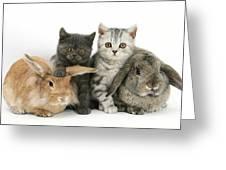 Kittens And Rabbits Greeting Card