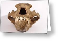 Kodiak Bear Skull Greeting Card
