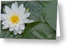 Leveille Collection Greeting Card