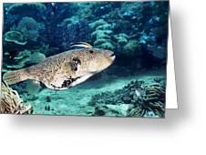 Map Pufferfish Greeting Card by Georgette Douwma