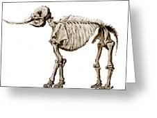 Mastodon Skeleton Greeting Card by Science Source