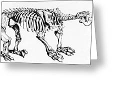 Megatherium, Extinct Ground Sloth Greeting Card