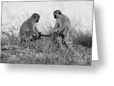 3 Monkeys Hey Its Not A Wig Greeting Card