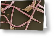 Nematode Worms, Sem Greeting Card