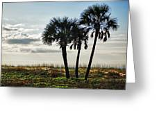 3 Palms On The Beach Greeting Card