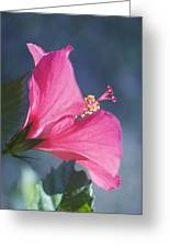 Pink, Blue And Green Greeting Card