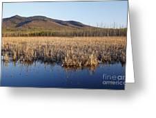 Pondicherry Wildlife Refuge - Jefferson New Hampshire Greeting Card