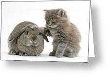 Rabbit And Kitten Greeting Card