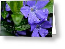 Raindrops On Sorcerers Violet Greeting Card