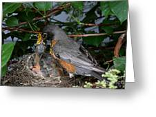 Robin Feeding Its Young Greeting Card