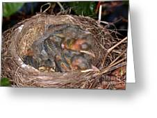 Robin Nestlings Greeting Card