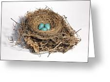 Robins Nest With Eggs Greeting Card