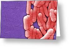 Salmonella, Sem Greeting Card