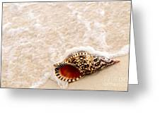 Seashell And Ocean Wave Greeting Card by Elena Elisseeva