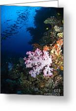 Soft Coral Seascape, Fiji Greeting Card