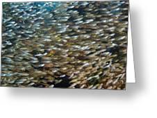 Spotnape Cardinalfish Greeting Card