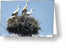 3 Storks In The Nest. Lithuania Greeting Card