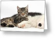Tabby Kitten & Border Collie Greeting Card by Mark Taylor