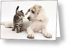 Tabby Kitten & Great Dane Pup Greeting Card