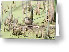 Teal Duck Greeting Card