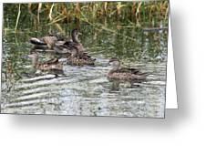 Teal Ducks Greeting Card