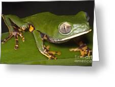 Tiger Stripe Monkey Frog Greeting Card