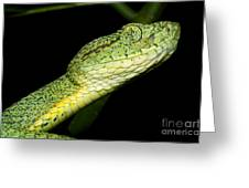 Two Striped Forest Pit Viper Greeting Card