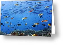 Underwater Landscape Greeting Card