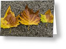 3 Wet Leaves Greeting Card