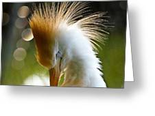 White Beauty Greeting Card