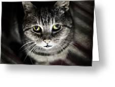 Wonky Eyed Tiger Greeting Card