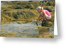 Young Girl Exploring A Maine Tidepool Greeting Card