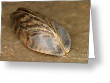 Zebra Mussel Greeting Card