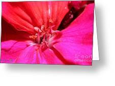 Zonal Geranium Named Tango Neon Purple Greeting Card
