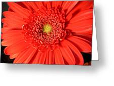 3010 Greeting Card