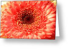 3026 Greeting Card