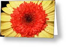 3084 Greeting Card