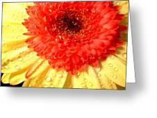 3101-001 Greeting Card