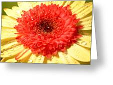 3112-001 Greeting Card