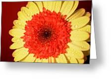 3131 Greeting Card