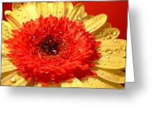 3164-001 Greeting Card
