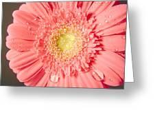 3239ac Greeting Card