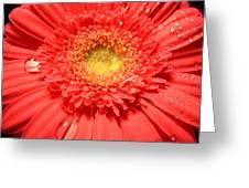 3258c Greeting Card