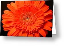 3289 Greeting Card