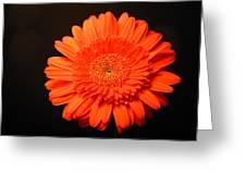 3290 Greeting Card